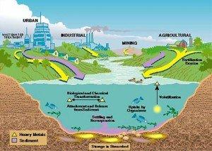 environmental-heavy-metal-contamination