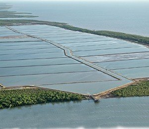 China shrimp diseases : 40 % production lost in 2013 dans Food contamination in China methodemadagascar-300x260